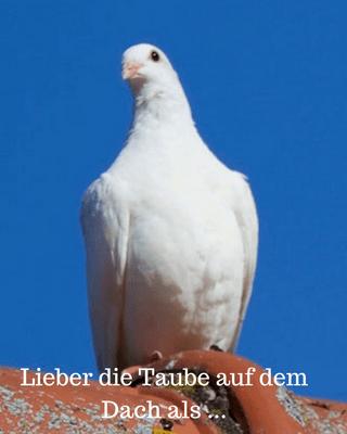 Taube Dach Beruflicher Neustart