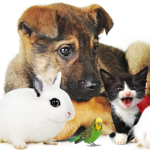 Tiergruppe Hund Katze Tierpflege