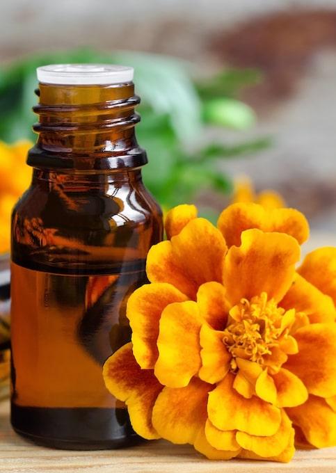Tagetes Studentenblume orangefarbene Blume